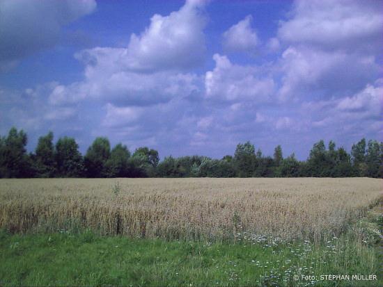 Grundstück neben GLS